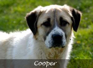 Cooper[1]